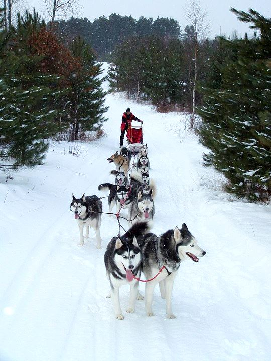 Dog Sled Photo